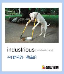 金山词霸单词industrious是什么意思?